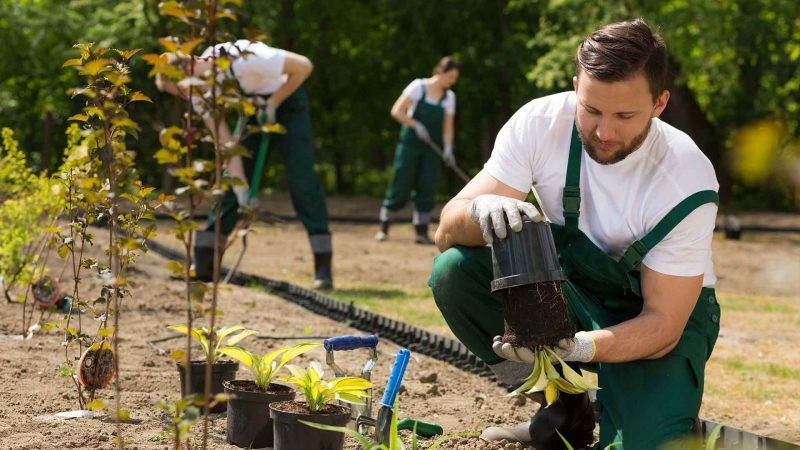 insight-into-landscaping-2